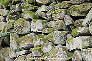 Close up on an old dry stone wall at Padley Gorge, Longshaw Estate, Peak District, Derbyshire, UK