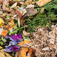 Vegetable, fruit and kitchen scraps, leaves, sawdust, and other organic matter decompsing on a compost pile.