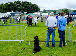 Biggar, South Lanarkshire, Scotland 23 July 2016<br /> <br /> Judging cattle in the show ring.<br /> <br /> (c) Andrew Wilson | Edinburgh Elite media