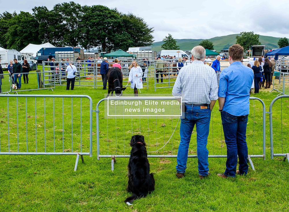 Biggar, South Lanarkshire, Scotland 23 July 2016<br /> <br /> Judging cattle in the show ring.<br /> <br /> (c) Andrew Wilson | Edinburgh Elite media