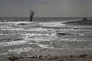 Single dead tree standing in the sea symbolic of sea level rise and erosion, Benacre, Suffolk, England