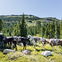 horse packing on the lee creek trail badger two medicine
