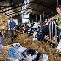 Nederland, De Rijp, 30 maart 2017.<br /> Biologische boerderij van Leyntje Melse (l)<br /> Een aantal koeien moet naar de slacht en daarmee is de boerin het niet eens.<br /> Op de foto: Leyntje Melse, haar zoon Nick (r) en haar man Evert.<br /> <br /> Foto: Jean-Pierre Jans