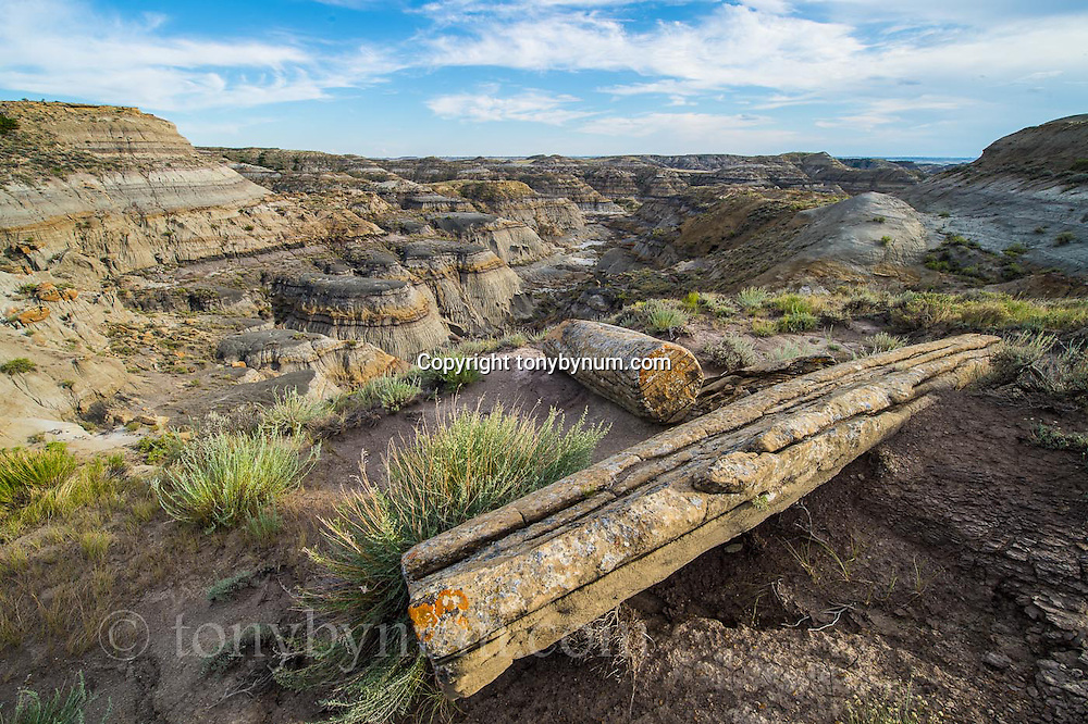 ancient petrified logs in the badlands of eastern montana near fort peck lake day arm conservation photography - montana wild prairie