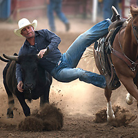 070115      Cayla Nimmo<br /> <br /> Kane Patterson from Texas jumps off his horse in the 40 and over steer wrestling competition at the Senior Rodeo in Grants Wednesday.