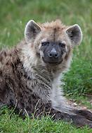 Hyiene