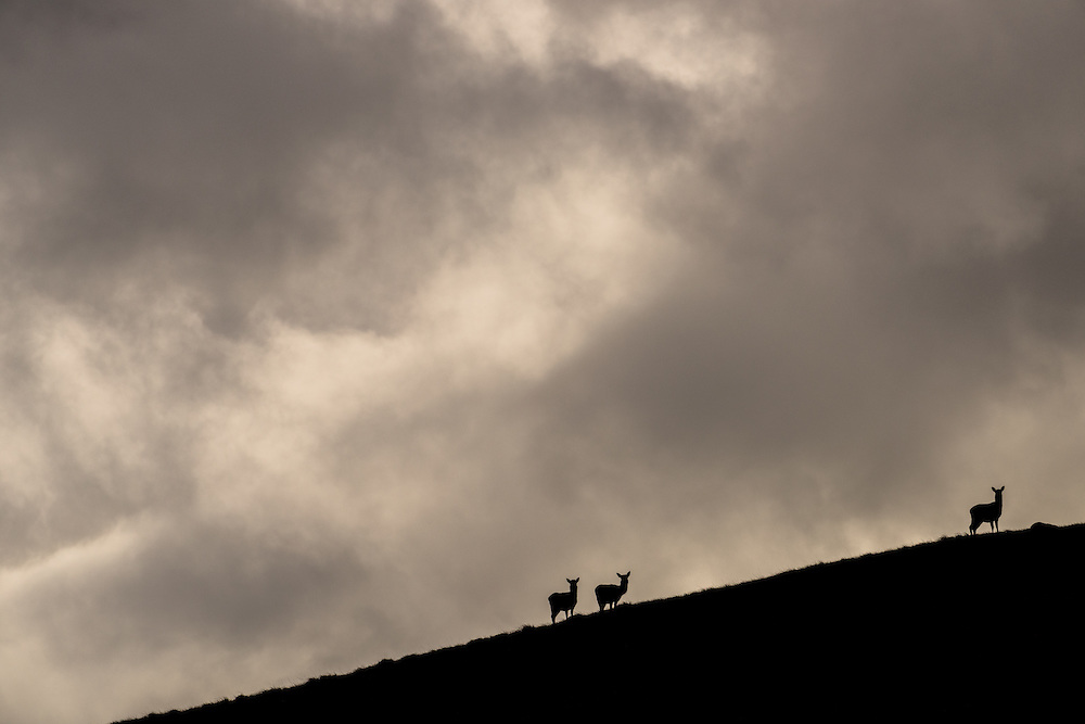 Red deer agains the sky, Jura, Scotland