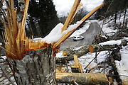 The ice storm that recently hit the Gorski Kotar has done great damage to forest.