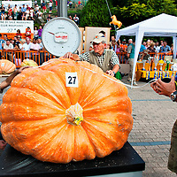 BRESCIA, ITALY - SEPTEMBER 12:  Judges measure and weight one of the giant pumpkins during this year competition at Sale Marasino on September 12, 2010 in Brescia, Italy.  Cutrupi Stefano of Radda in Chianti, won  this year Italian National Competition with his pumpkin weighing  507 Kg.