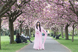April 14, 2017 - London, London, UK - People continue to enjoy the cherry blossom in Greenwich Park, south east London , on Good Friday. Credit: Rob Powell/LNP (Credit Image: © Rob Powell/London News Pictures via ZUMA Wire)