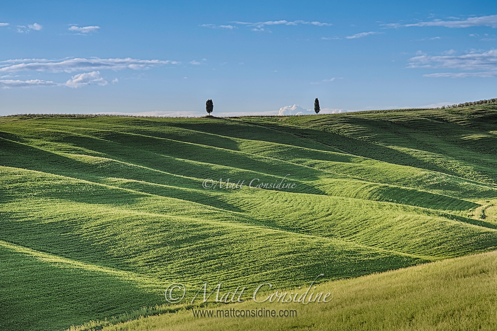 Undulating green hills with cypress pines in the distance. (Photo by Travel Photographer Matt Considine)