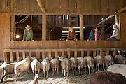 Owner Scottie and guests feed the sheep for the evening.