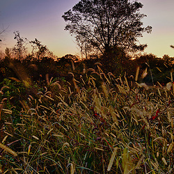 The field at Elmwood Farm in Hopkinton, Massachusetts. Sunrise. HDR.