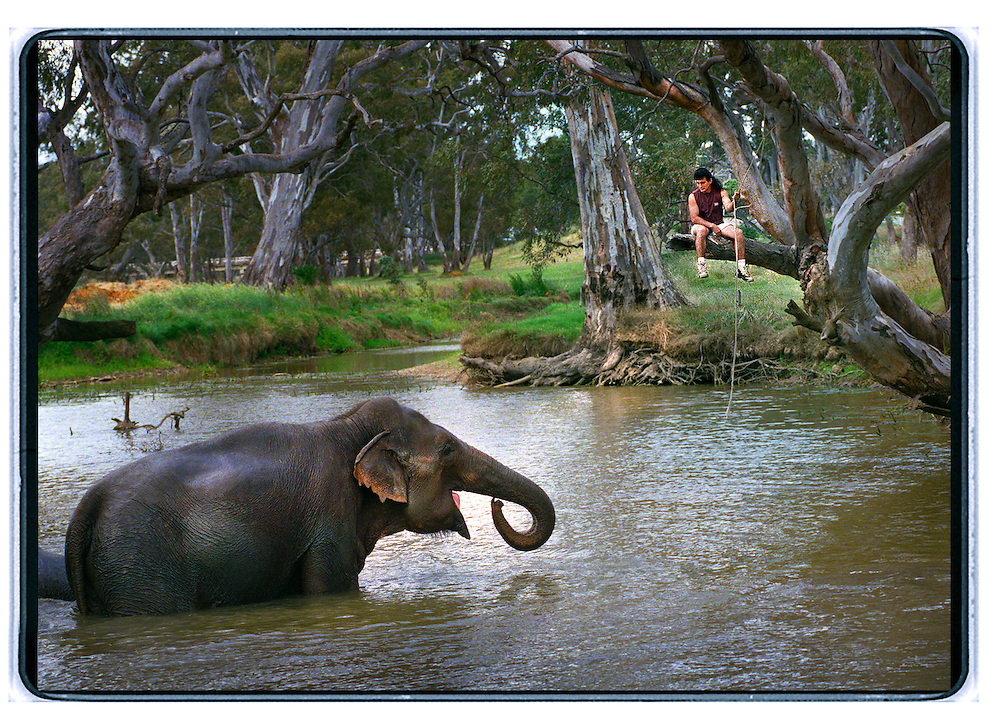 ashtons circus: 971127: avoca: pic - Craig Sillitoe : elephant trainer Brazil with Abu in Avoca. melbourne photographers, commercial photographers, industrial photographers, corporate photographer, architectural photographers, This photograph can be used for non commercial uses with attribution. Credit: Craig Sillitoe Photography / http://www.csillitoe.com<br />