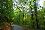 "Dreve des Tumuli in the Sonian Forest, Foret de Soignes, or Zoniënwoud, an 11,000 hectare woodland to the southeast of Brussels, providing a ""green lung"" for the polluted, traffic choked city. The forest is currently in three jurisdictions, Brussels, Flanders and Wallonia, but EU involvement in 2013 will see development of plans to re-unify the forest, for the benefit of humans and wildlife."