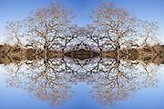 Photo Illustration of oak trees reflecting off mountian lake