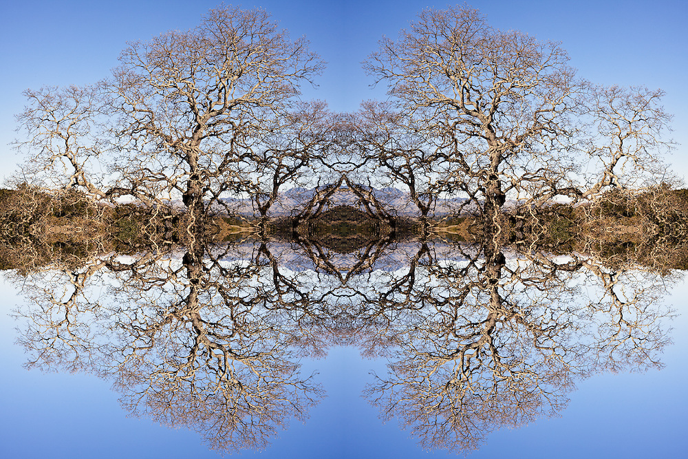 Photo Illustration of oak trees reflecting off mountian lake