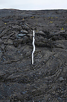 A weathered white tree branch on an old lava flow in Hawai'i Vocanoes National Park