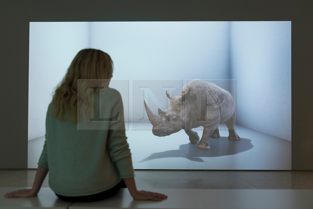 """© Licensed to London News Pictures. 20/11/2019. LONDON, UK. A staff member views """"The Substitute"""", 2019, by Alexandra Daisy Ginsberg. Preview of """"Eco-Visionaries"""" exhibition at the Royal Academy of Arts in Piccadilly.  The exhibition examines humankind's ecological impact on the planet through works from 21 international practitioners using a variety of media.  The show runs 22 November to 23 February 2020.  Photo credit: Stephen Chung/LNP"""