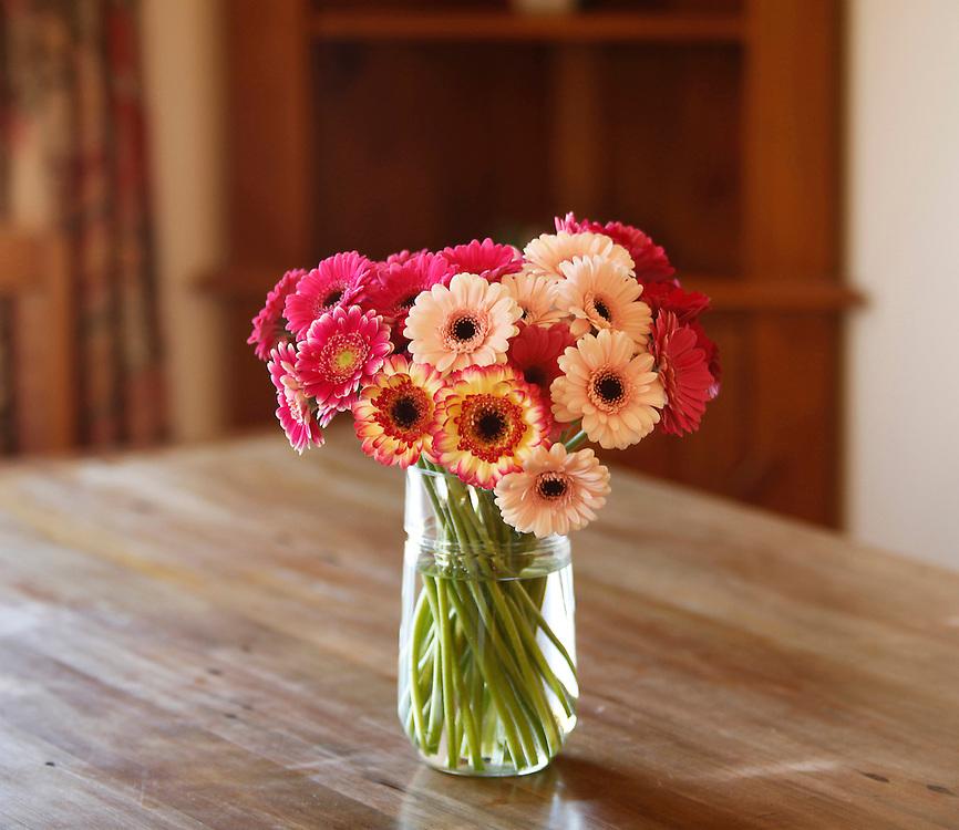 Vase of gerbera flowers, Sefton, New Zealand, Wednesday, August 31, 2011.  Credit: SNPA / Pam Johnson