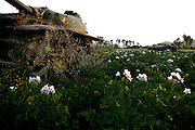 Old, unusable tanks left in Bamiyan after the Russian invasion of Afghanistan are being enveloped by growing weeds while sitting as relics in what has become a field for cultivating potatoes. The Buddhas of Bamiyan were two 6th century monumental statues of standing Buddhas carved into the side of a cliff in the Bamiyan valley in the Hazarajat region of central Afghanistan, situated 230 km northwest of Kabul at an altitude of 2500 meters. The statues represented the classic blended style of Gandhara art. The main bodies were hewn directly from the sandstone cliffs, but details were modelled in mud mixed with straw, coated with stucco. Amid widespread international condemnation, the smaller statues (55 and 39 meters respectively) were intentionally dynamited and destroyed in 2001 by the Taliban because they believed them to be un-Islamic idols. Once a stopping point along the Silk Road between China and the Middle East, researchers think Bamiyan was the site of monasteries housing as many as 5,000 monks during its peak as a Buddhist centre in the 6th and 7th centuries. It is now a UNESCO Heritage Site since 2003. Archaeologists from various countries across the world have been engaged in preservation, general maintenance around the site and renovation. Professor Tarzi, a notable An Afghan-born archaeologist from France, and a teacher in Strasbourg University, has been searching for a legendary 300m Sleeping Buddha statue in various sites between the original standing ones, as documented in the old account of a renowned Chinese scholar, Xuanzang, visiting the area in the 7th century. Professor Tarzi worked on projects to restore the other Bamiyan Buddhas in the late 1970s and has spent most of his career researching the existence of the missing giant Buddha in the valley.
