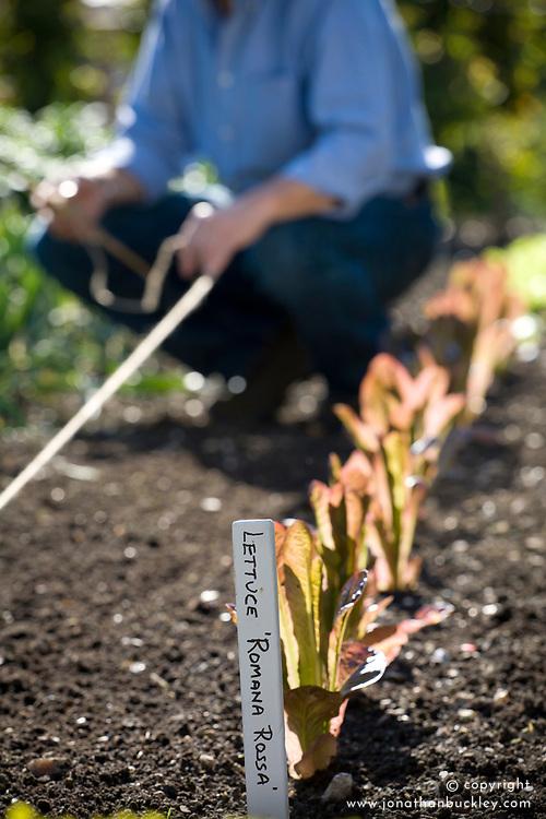 Using a garden line in a vegetable garden