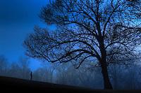 Lisa Johnston | lisa@aeternus.com | Tiwtter: @aeternusphoto Big tree, little boy.