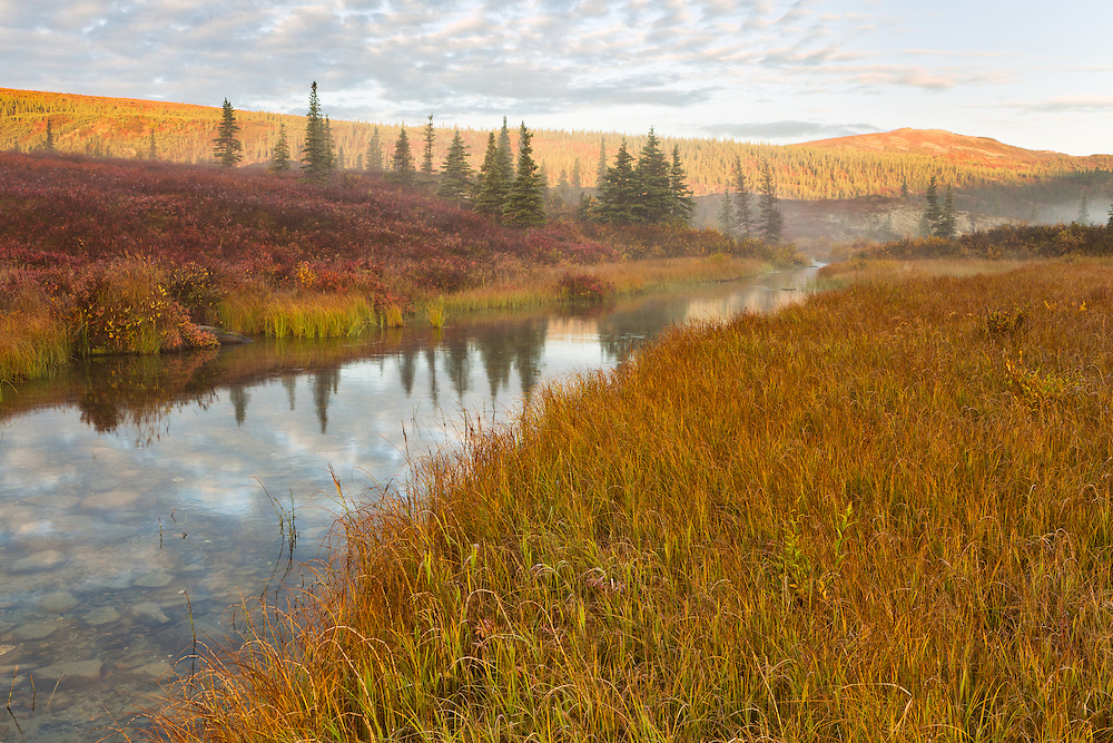 Fog, early morning light, and reflections in the outlet stream of Wonder Lake add to the fall colors and foothills of the Alaska Range in Denali National Park in Southcentral Alaska.