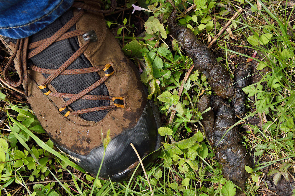 Wolf scat, Tangjiahe National Nature Reserve, NNR, Qingchuan County, Sichuan province, China