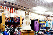 A jackalope on display at a cowboy boot store in Austin Texas in June 2010.
