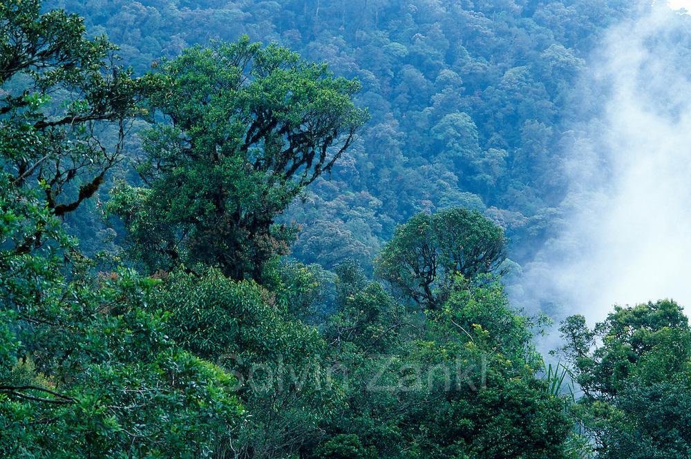 The Tangkoko rain forest is the home of the Celebes Crested Macaque. | Die Schopfmakaken leben im Tangkoko Naturreservat.