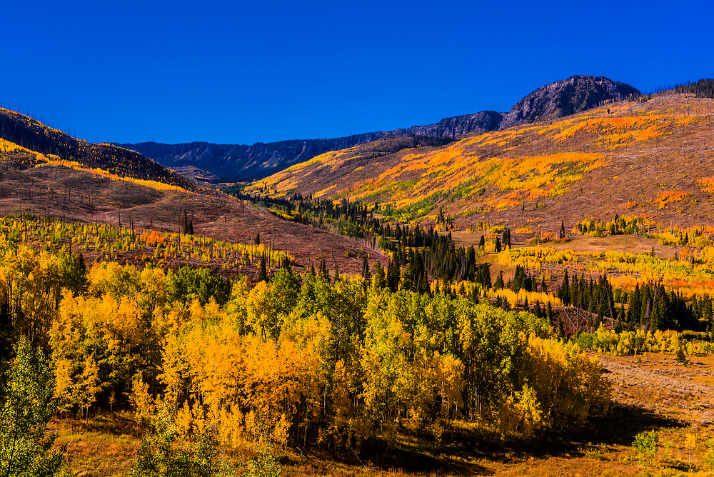 Fall foliage along Trappers Lake Road, Flat Tops Trail Scenic Byway in the Flat Tops Wilderness, Colorado USA.
