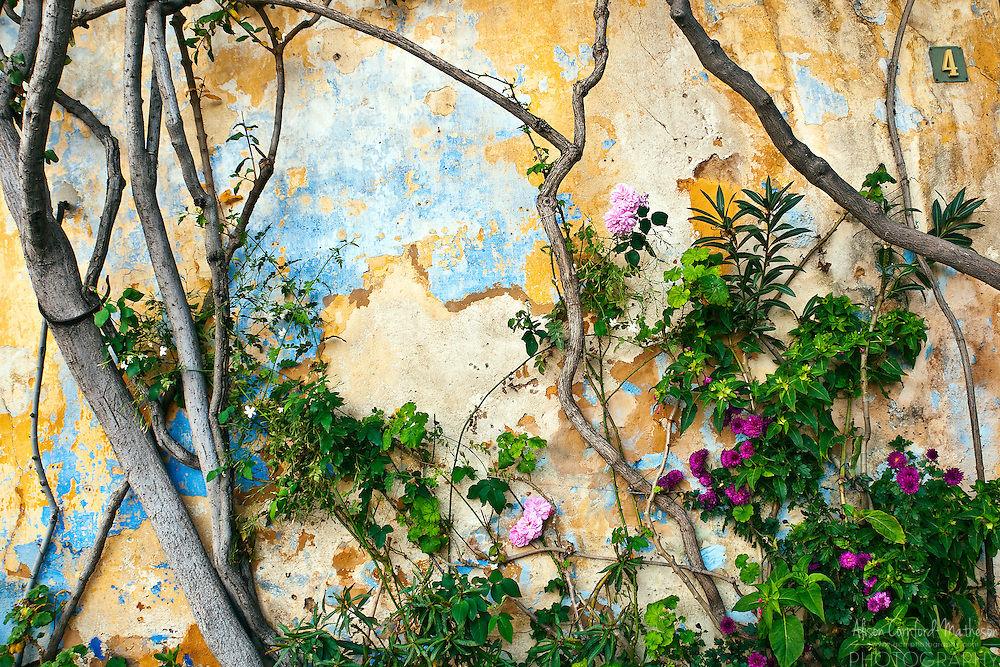 Flowers and vines climb up a wall with peeling paint in Athens, Greece