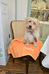 Doris Beddow at a party hosted by Lulu Guinness and Daphne's to launch Lulu's Designer Dog Bowl and to mark Daphne's allowing dogs through it's doors, held at Daphne's, Draycott Avenue, London on 28th June 2016.
