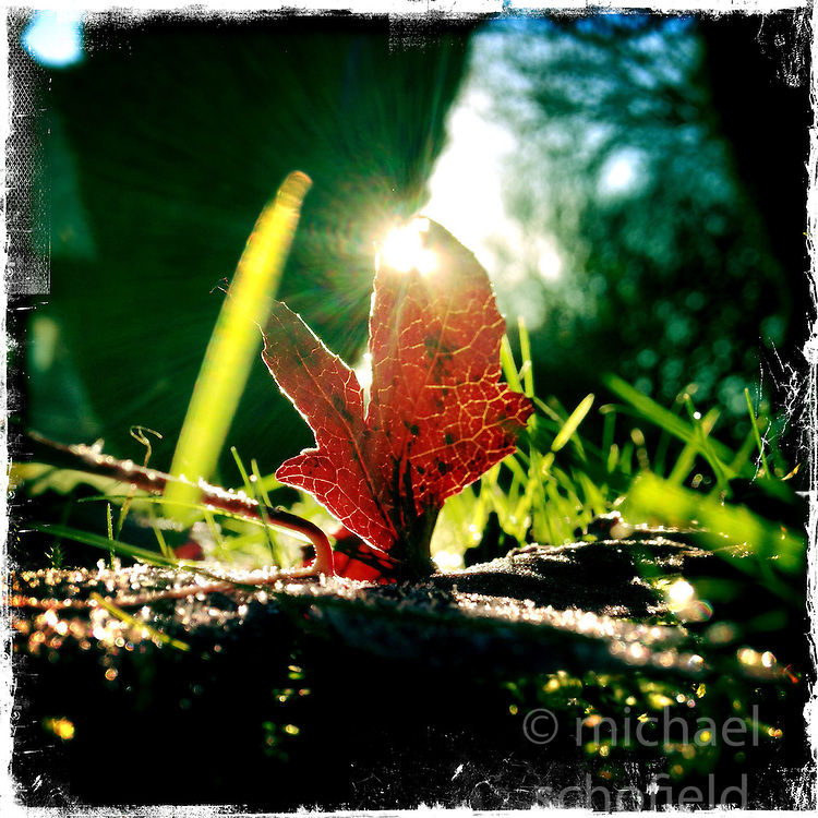 Leaf in sunlight.<br /> Picture taken with the Hipstamatic iPhone photo app.