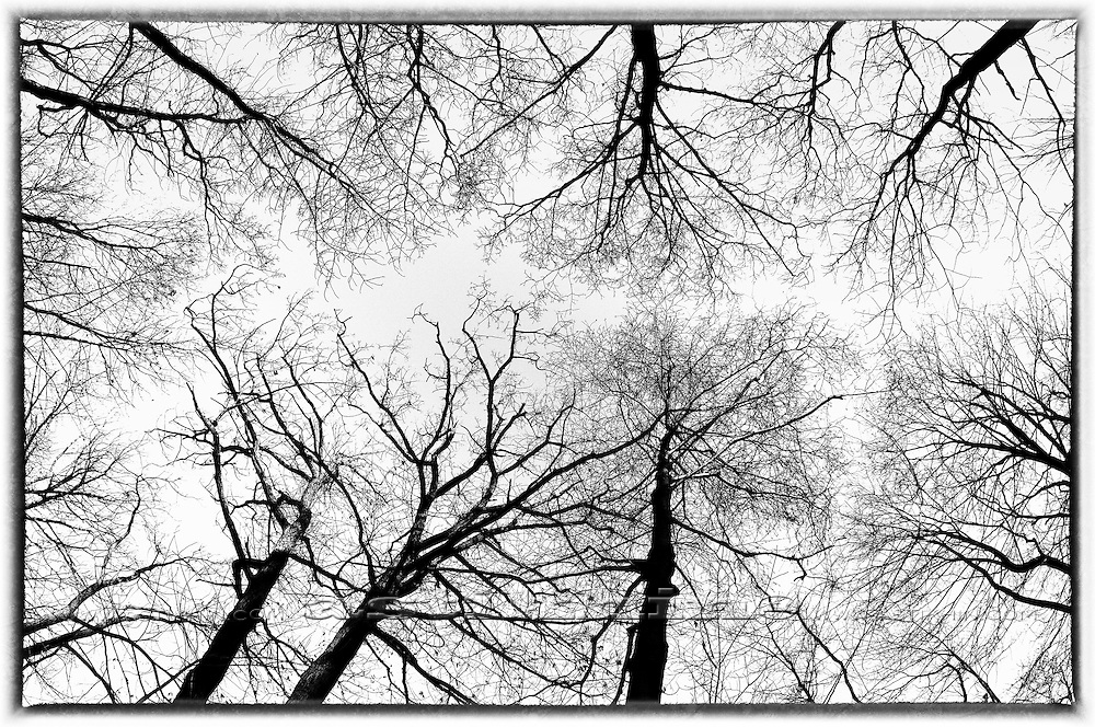 Branches isolated on white background.