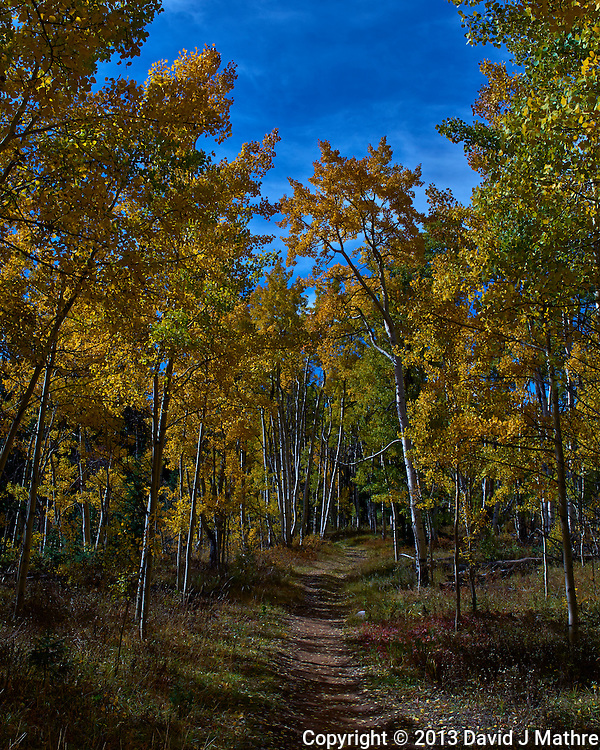 Trail into the Fall Aspens, Ashcroft Ghost Town, Colorado. Gone to See America 2013. Image taken with a Leica X2 camera (ISO 100, 24 mm, f/11, 1/400 sec). Day 3 on a Colorado Rockies Photo Safari with Jason Odell.