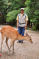 A Japanese man poses with a wild deer in the grounds of Kasuga-Taisha Shrine in Nara, Japan. The deer have become quite tame and expect to be fed.