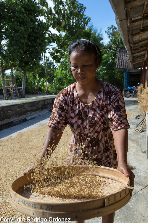 Trihandayani, 52, sieves grains of rice at Suparjiyem's parents' home in Wareng, Wonosari subdistrict, Gunung Kidul district, Yogyakarta Special Region, Indonesia. She is one of Suparjiyem's in-laws and mother of four.