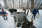 Maple sugaring with horses and sap buckets at the Russell Farm in Hinesburg, Vermont.