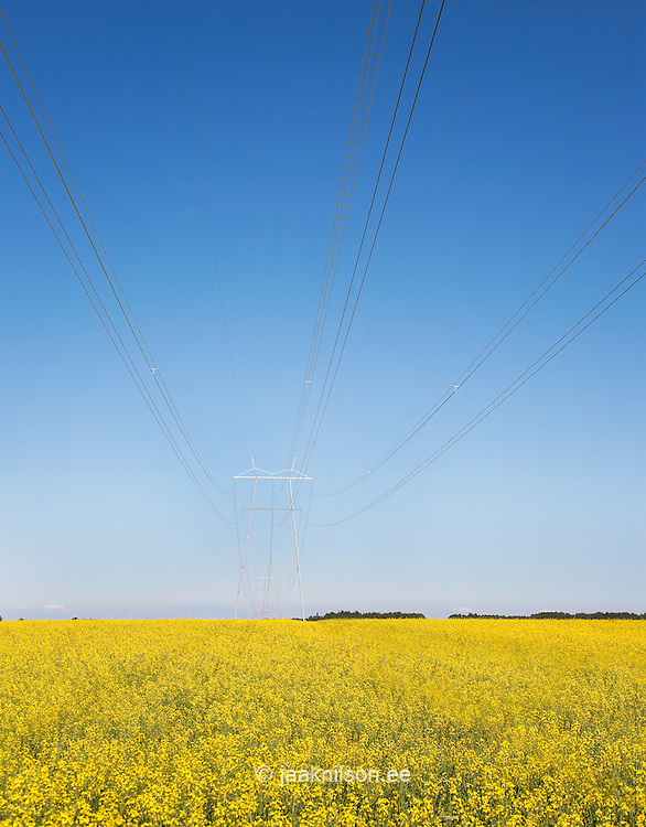 High voltage power pylon, transmission towers and power lines. Oilseed, rape field.