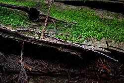 Forest Detail, Shaw Island, Washington, US