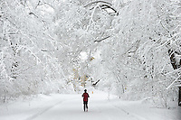Editorial Travel Photography: The Thrill of running in the snow, Mont Royal Park, Montreal, Quebec, Canada