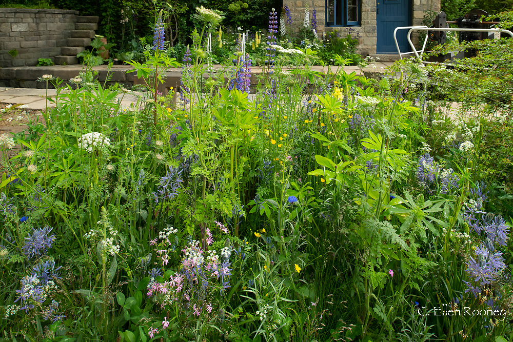 Wild flowers next to a canal in the  Welcome to Yorkshire Garden designed by Mark Gregory at the RHS Chelsea Flower Show 2019, London, UK