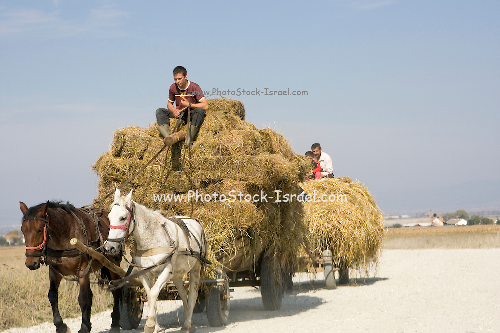 Romania, Horses pull a cart load of hay