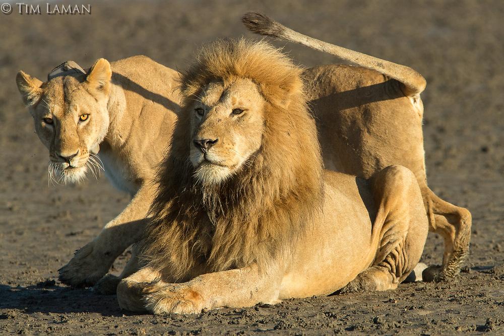 Ndutu, Ngorongoro Conservation Area<br /> Tanzania, Africa