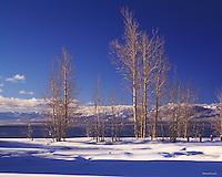 Lake Tahoe Landscape Winter Aspens