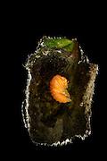 [captive] Beetle pupa of Hazel Leaf-roller Weevil (Apoderus coryli) Westensee, Germany | Nach Wochen des Ei- und Madenstadiums hat sich die heranwachsende Haselblattroller-Larve (Apoderus coryli) im Inneren ihrer Blattrolle verpuppt.