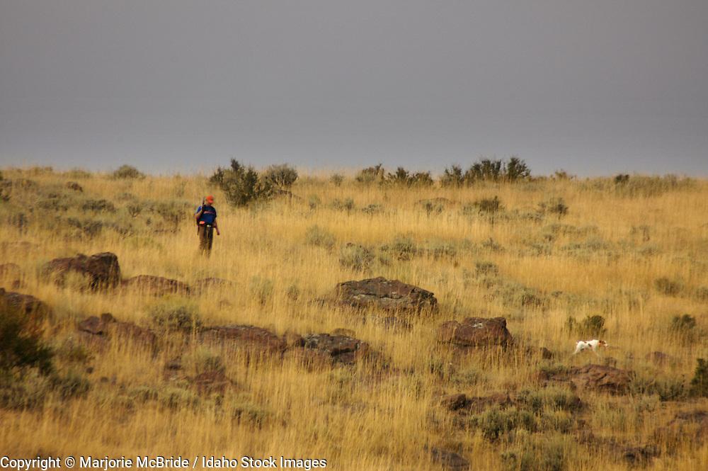 Man with with dog bird hunting near Boise, Idaho.