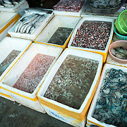 A variety of prawns (shrimp) for sale at the fish and flower market in Mandalay, Myanmar (Burma).